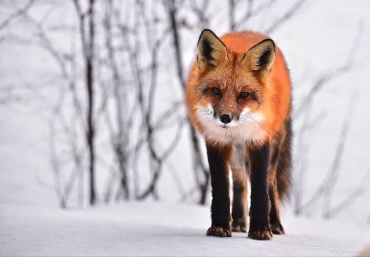 分享:狐狸的观念(令人深思)